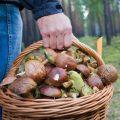 Первая помощь при отравлении грибами: советы медиков