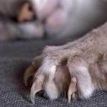 Что мы знаем о кошачьих царапинах? Симптомы и лечение