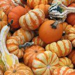 Почему осенью нужно есть тыкву, свеклу и грибы