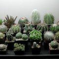 Ученые назвали пять смертельно опасных комнатных растений
