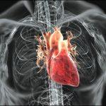 Назван простой способ определить риск инфаркта на 10 лет вперед