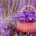 Какие растения нужно поставить дома, чтобы побороть стресс