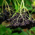 Простое и мощное растение против рака, диабета и заболеваний почек