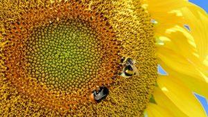 Почему семена опасны для организма человека
