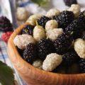 Запаситесь этой ягодой и получите лекарство от простуды, бессонницы и изжоги