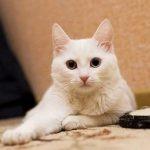 Кошка в доме продлевает человеку жизнь