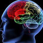 Ученые обнаружили, что позволяет мозгу оставаться молодым и здоровым